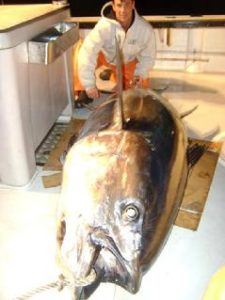 239_first_tuna_on_new_boat_