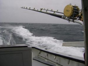 383_Giant_tuna_rods